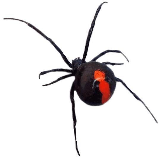 nomes de aranhas