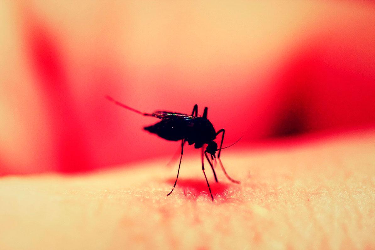 alergia a insetos